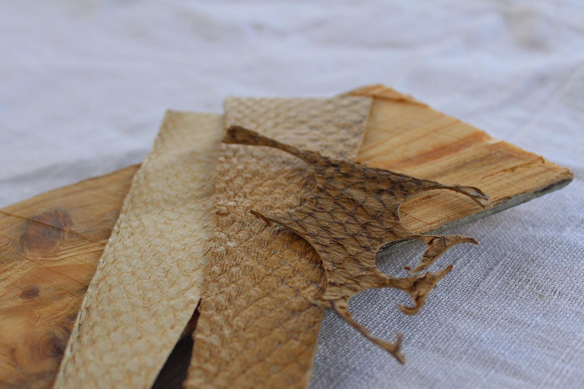 Fischleder Haut vom Lachs