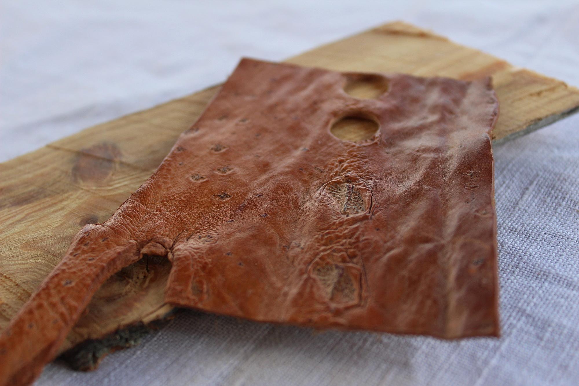 Fischleder Haut vom Stör